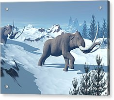 Two Large Mammoths Walking Slowly Acrylic Print