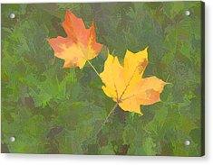 Two Leafs In Autumn Acrylic Print by Indiana Zuckerman