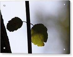 Two Leaves Acrylic Print by Ulrich Kunst And Bettina Scheidulin