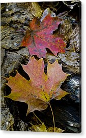 Two Leaves Acrylic Print by Larry Bohlin