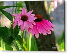 Two Little Peggies Acrylic Print by France Laliberte