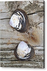 Two Acrylic Print by M West