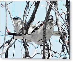 Two Mocking Birds Acrylic Print