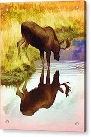 Two Moose  Acrylic Print