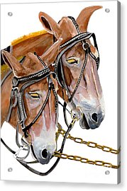Two Mules - Enhanced Color - Farmer's Friend Acrylic Print