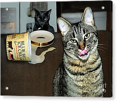 Two Naughty Cats Acrylic Print