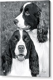 Acrylic Print featuring the photograph Two Of A Kind by Barbara Dudley
