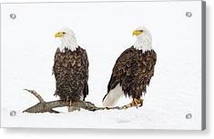 Two Of A Kind Acrylic Print by John Blumenkamp