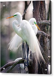 Two Of A Kind Acrylic Print by Tammy Smith