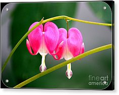 Acrylic Print featuring the photograph Two Of Hearts by Patti Whitten