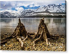 Two Old Friends Acrylic Print by Mitch Shindelbower