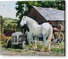 Two Old Grays Acrylic Print by Anthony Forster