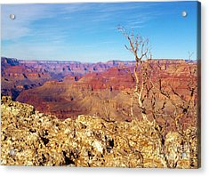 Two One Hundred Eighty Two Acrylic Print by Debbie L Foreman