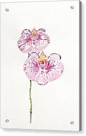 Two Orchids Acrylic Print