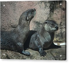 Two Otters Acrylic Print