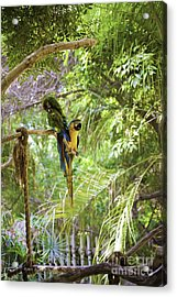 Two Parrots Acrylic Print