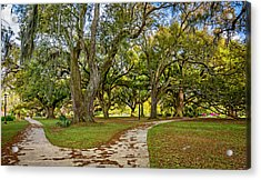 Two Paths Diverged In A Live Oak Wood...  Acrylic Print by Steve Harrington