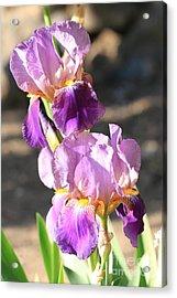 Two Purple Irises Acrylic Print