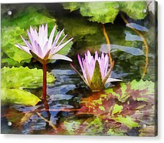 Two Purple Water Lotus Acrylic Print