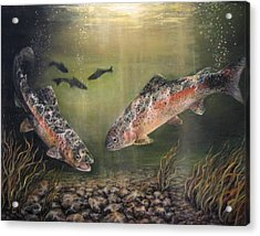 Two Rainbow Trout Acrylic Print by Donna Tucker