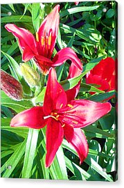Two Red Flowers Acrylic Print