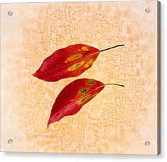 Two Red Leaves On Pink Background Acrylic Print