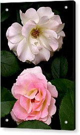'two Roses' Acrylic Print