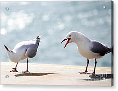 Acrylic Print featuring the photograph Two Seagulls by Yew Kwang