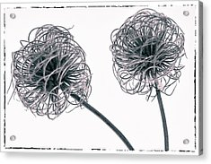 Two Seeds Acrylic Print