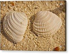 Two Shells Acrylic Print by Adam Romanowicz