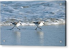 Two Step Acrylic Print by Greg Graham