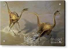 Two Struthiomimus Chasing Each Other Acrylic Print by Jan Sovak