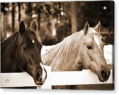 Two Sweet Horses Acrylic Print