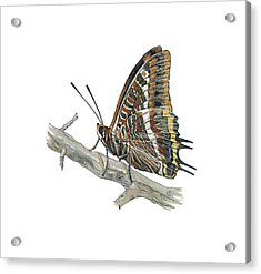 Two-tailed Pasha Butterfly, Artwork Acrylic Print