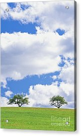 Acrylic Print featuring the photograph Two Trees by Alan L Graham