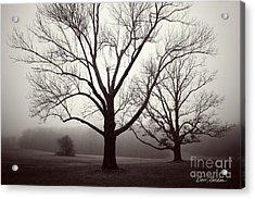 Two Trees Acrylic Print