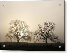 Two Trees In Fog Acrylic Print