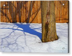 Two Trees In One Acrylic Print by Paul W Faust -  Impressions of Light