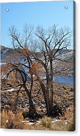 Two Trees In The Mountains Acrylic Print by Lula Adams