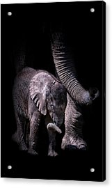 Two Trunks Acrylic Print