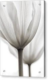 Two Tulips Bw 1 Acrylic Print by Peter Scott