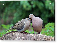 Two Turtle Doves Acrylic Print