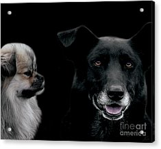 Two Types Of Mutts Acrylic Print by Nola Lee Kelsey