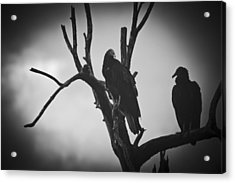 Acrylic Print featuring the photograph Two Vultures by Bradley R Youngberg