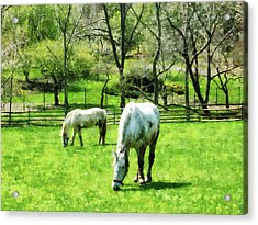 Two White Horses Grazing Acrylic Print by Susan Savad