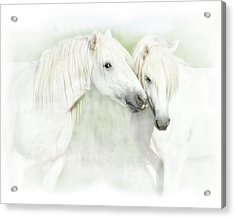 Two White Horses Of Camargue, French Acrylic Print