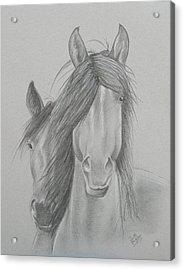 Two Wild Horses Acrylic Print