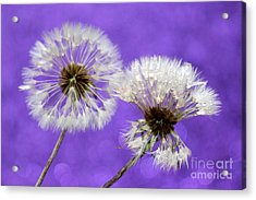 Two Wishes Acrylic Print by Krissy Katsimbras