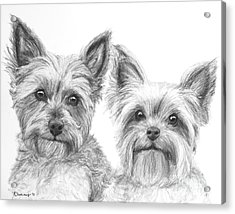 Two Yorkshire Terriers In Charcoal Acrylic Print
