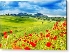 Typical Landscape Of Tuscany Acrylic Print by Gehringj